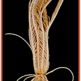 AXE 1 : Développement larvaire, Métamorphose et Dispersion