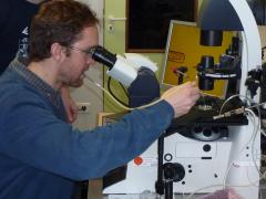 Microinjection de CRISPR/Cas DNMT1 dans des stades embryonnaires précoces de C. gigas