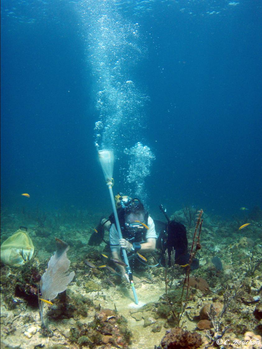 Prélèvement de «biofilm» à la suceuse.  (Pointe des Nègres, Guadeloupe).