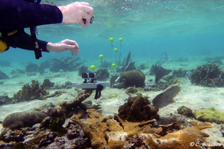 Impact de l'hydrodynamisme sur les gorgones. Enregistrement mouvements de la houle  (Grand Cul-Sac-Marin, Guadeloupe).