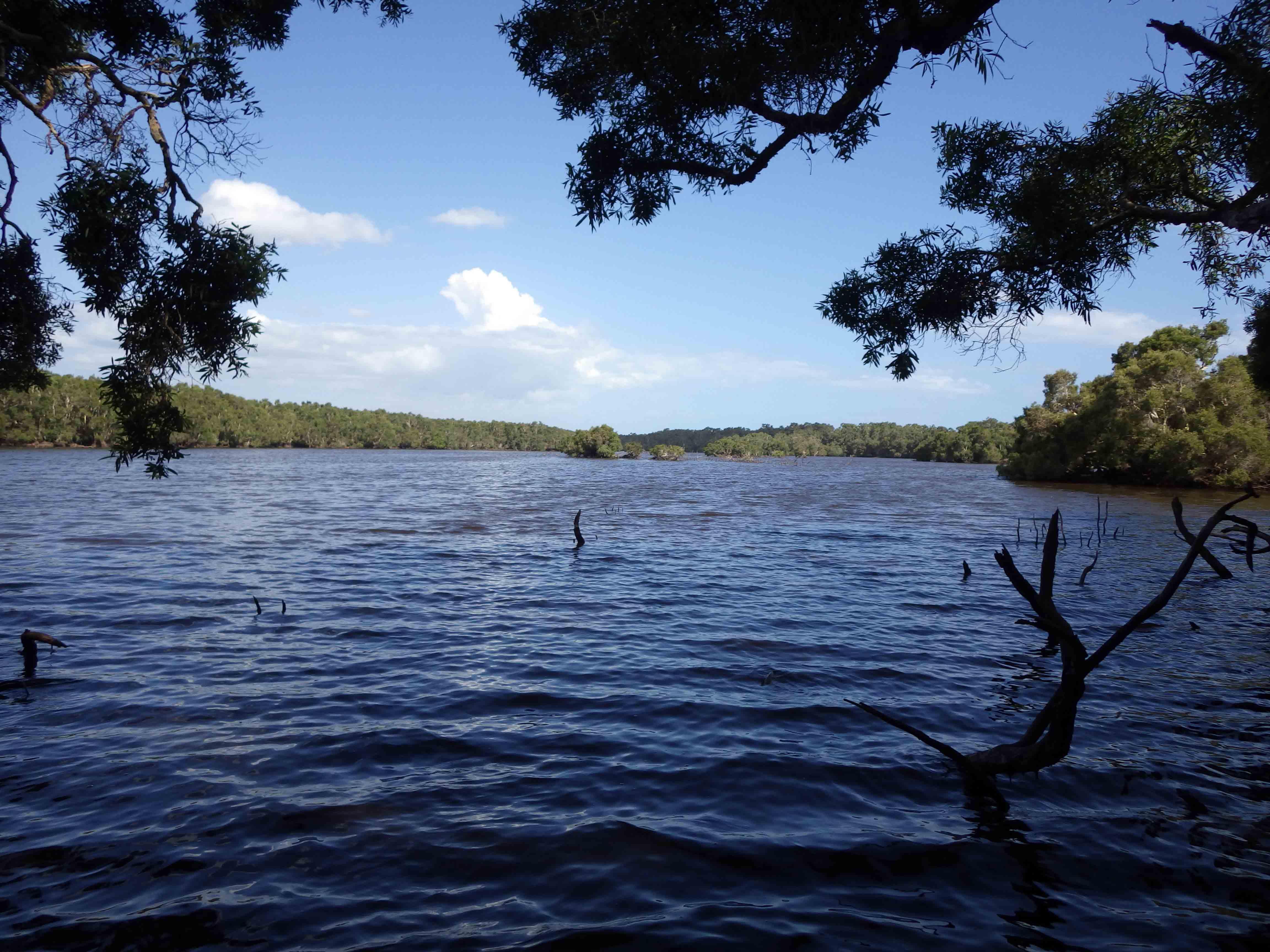 Planète revisitée, Nouvelle-Calédonie. Centre du marais Temrock. Photo Nicolas Rabet
