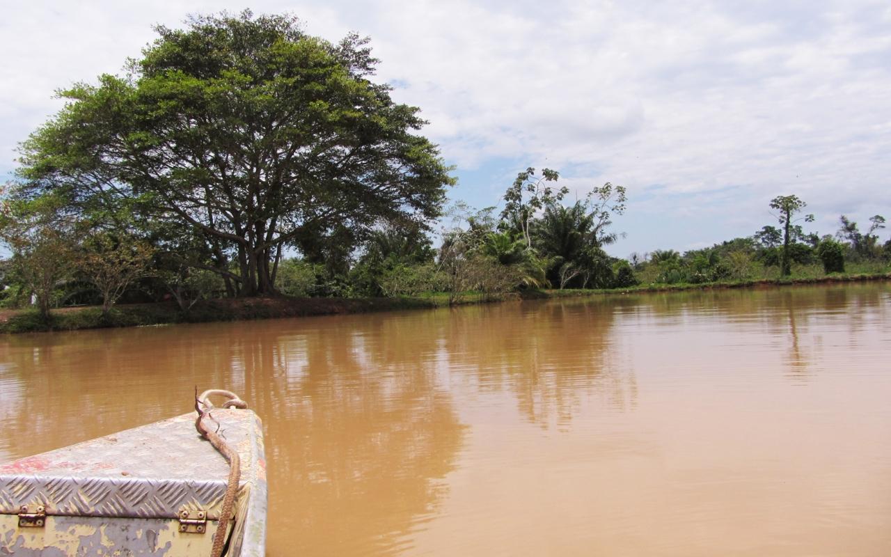 Vue de l'étang expérimental - J. Nunez
