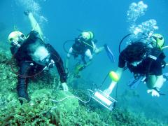Diving PAM measurements on corals