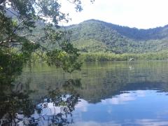 Mangrove préservée dans la région de Rio de Janeiro, Brésil - G. Abril