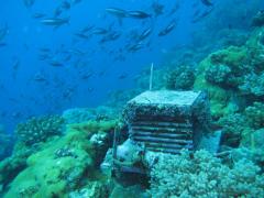 ARMS : Mini-HLM dans l'île d'Europa, deux ans après la pose (10 m de profondeur) - H. Bruggemann