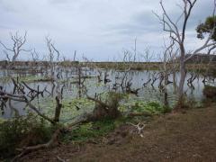 Planète revisitée, Nouvelle-Calédonie. Marécage permanent. Photo Nicolas Rabet