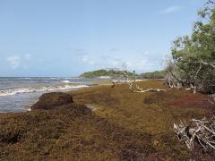 Saint Félix, Le Gosier, Guadeloupe